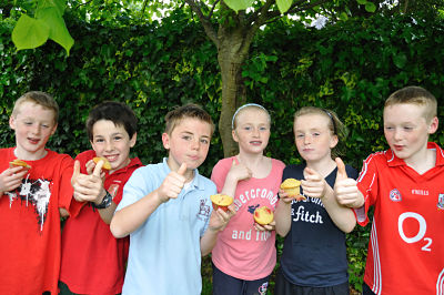 Innocent Summer Muffins Test Panel