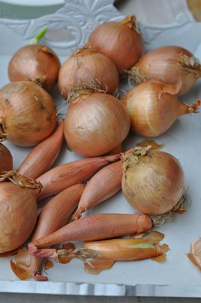 Onions & Shallots