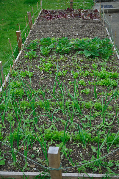 Raised Beds May 2012