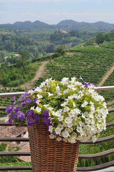 Flowers at Villa Tiboldi