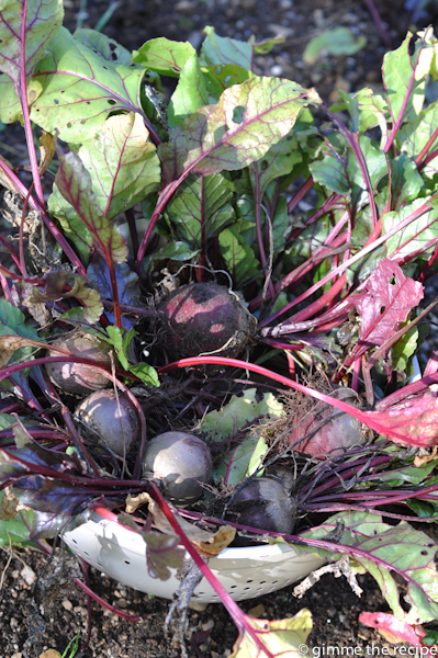 Beetroots in the garden